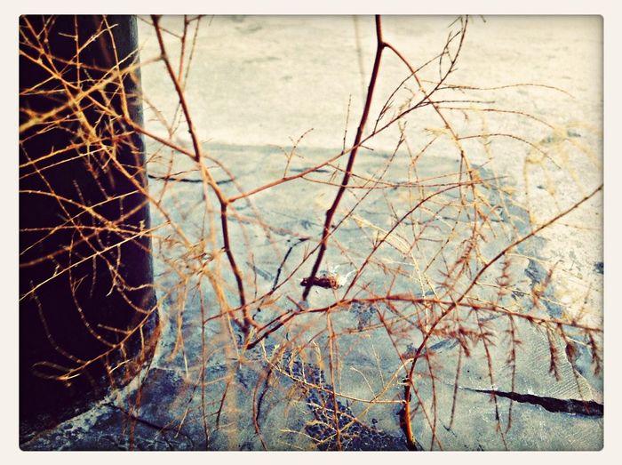 Little tree Nature Trees Strange_places Procrastinating