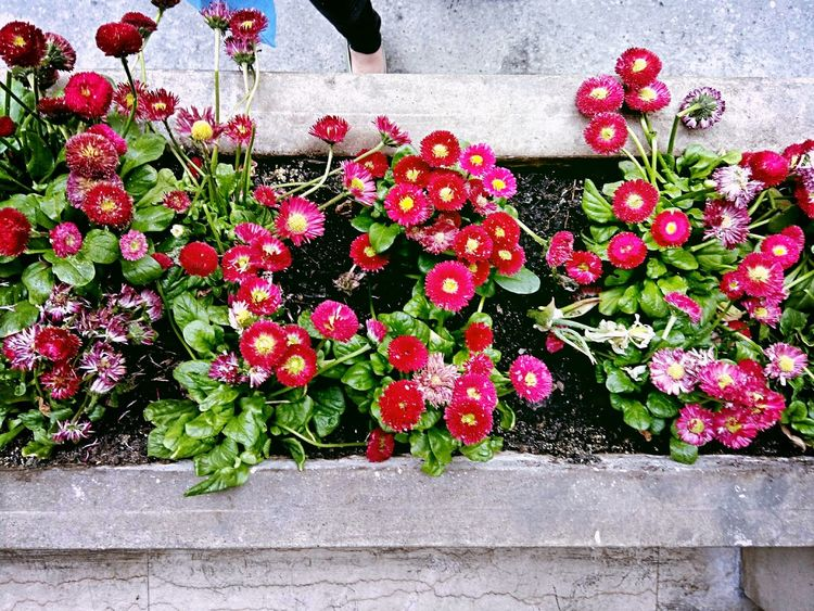 From Above  Flowers Red Flower Potted Plants Concrete Footfie Colour Of Life