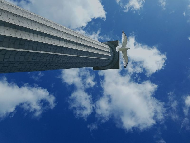 Low Angle View Architecture Built Structure Outdoors Modern Building Story Development Cloud - Sky Tall Blue Tall - High Building Exterior Seagull Wingspan Wings Spread Peace Tower Day Cloud Growth Skyscraper Sky