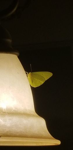 Midnight Visitor Green Butterfly Lamp Pretty Yellow Flying