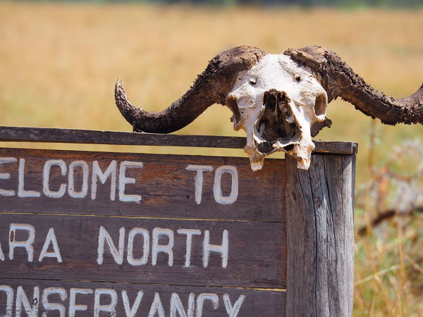 WELCOME TO MARA NORTH CONSERVANCY Africa Animal Bones Conservancy Conservation Day Kenya Mara North Outdoors Sign Skeleton Skull Text Western Script Wildlife Wood