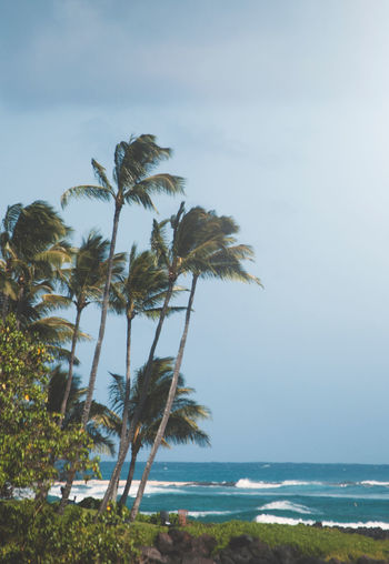 Ocean Palm Hawaii Sea Sky Water Beauty In Nature Plant Tree Tropical Climate No People Growth Beach Tranquil Scene Tranquility Palm Tree Nature Day Land Horizon Over Water Outdoors Scenics - Nature Horizon