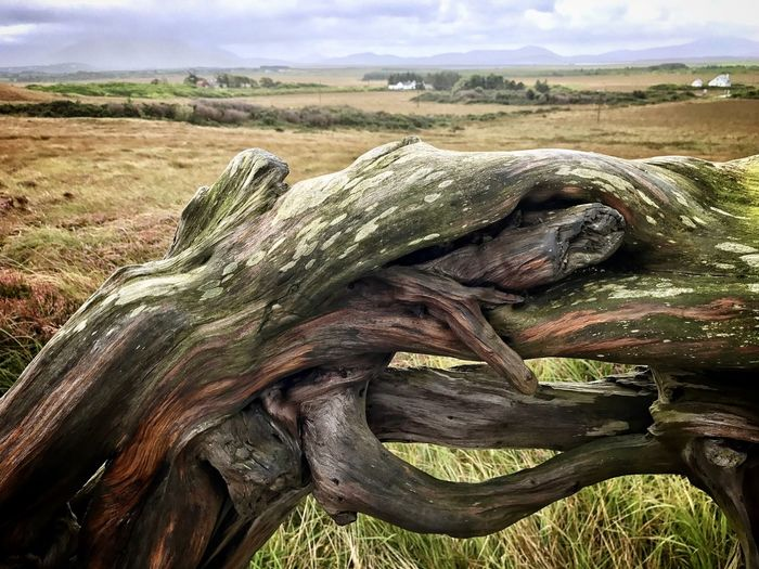 Close-up of driftwood on field against sky