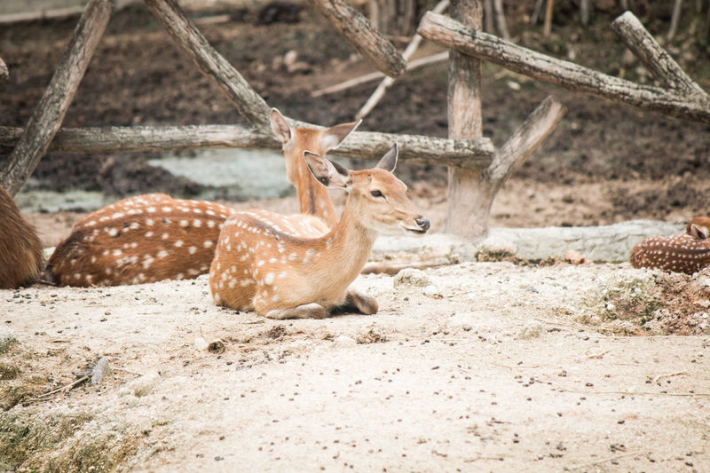 View of deer on land