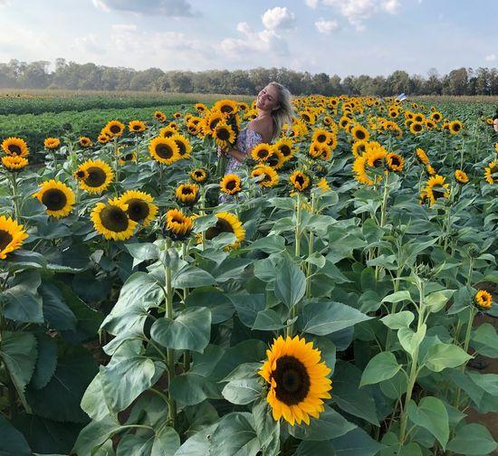 Sunflowers on field against sky