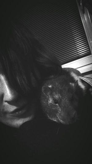 Mr. Lover❤ Pet 4EinMy💚! 2018 Rat Prague Czech Republic My Boy Frankie Goes To Hollywood My Love❤ Love Him Black And White Blackandwhite Black & White Pets