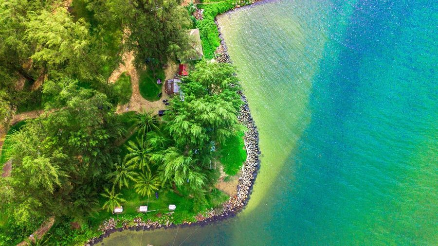 High angle view of trees on beach