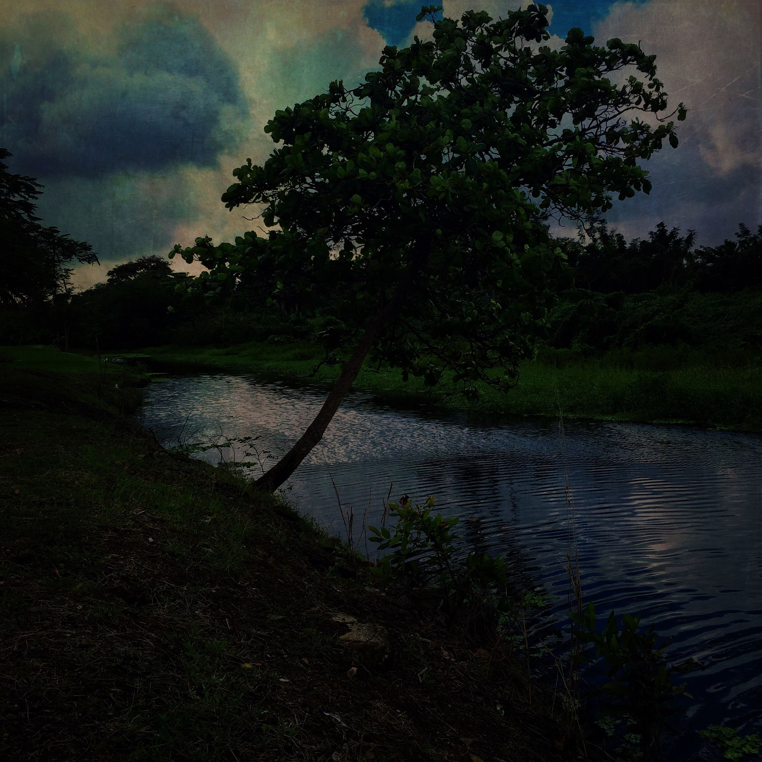water, tree, tranquility, sky, tranquil scene, lake, nature, reflection, scenics, beauty in nature, cloud - sky, growth, branch, grass, river, silhouette, no people, cloud, outdoors, calm