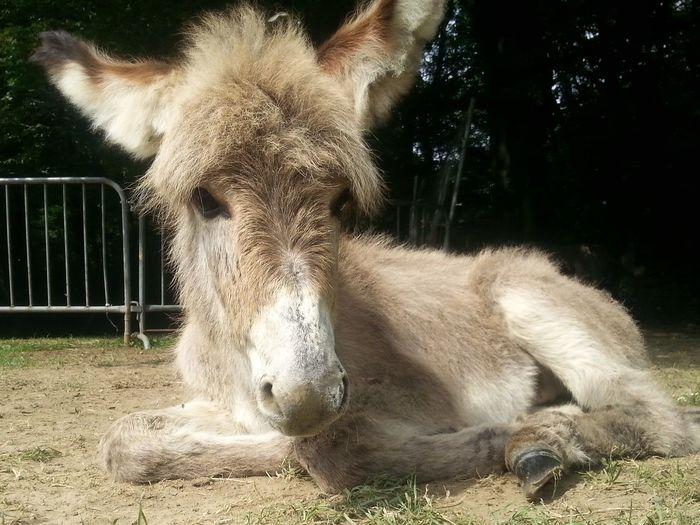 Outdoors No People Nature Donkey Foal Sweet Longeared
