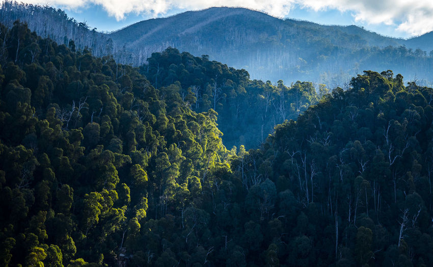 Alpine Australia Foggy Mountains Forest Light Mountain View Falls Creek Forest Green Color Growth Gumtrees Landscape Melbourne Melbourne Alpine Montain  Mountain Mountain Range Nature Outdoors Scenics Skiresort Tranquility Tree