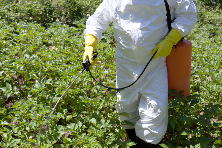 Midsection Of Man Spraying Chemical On Plants