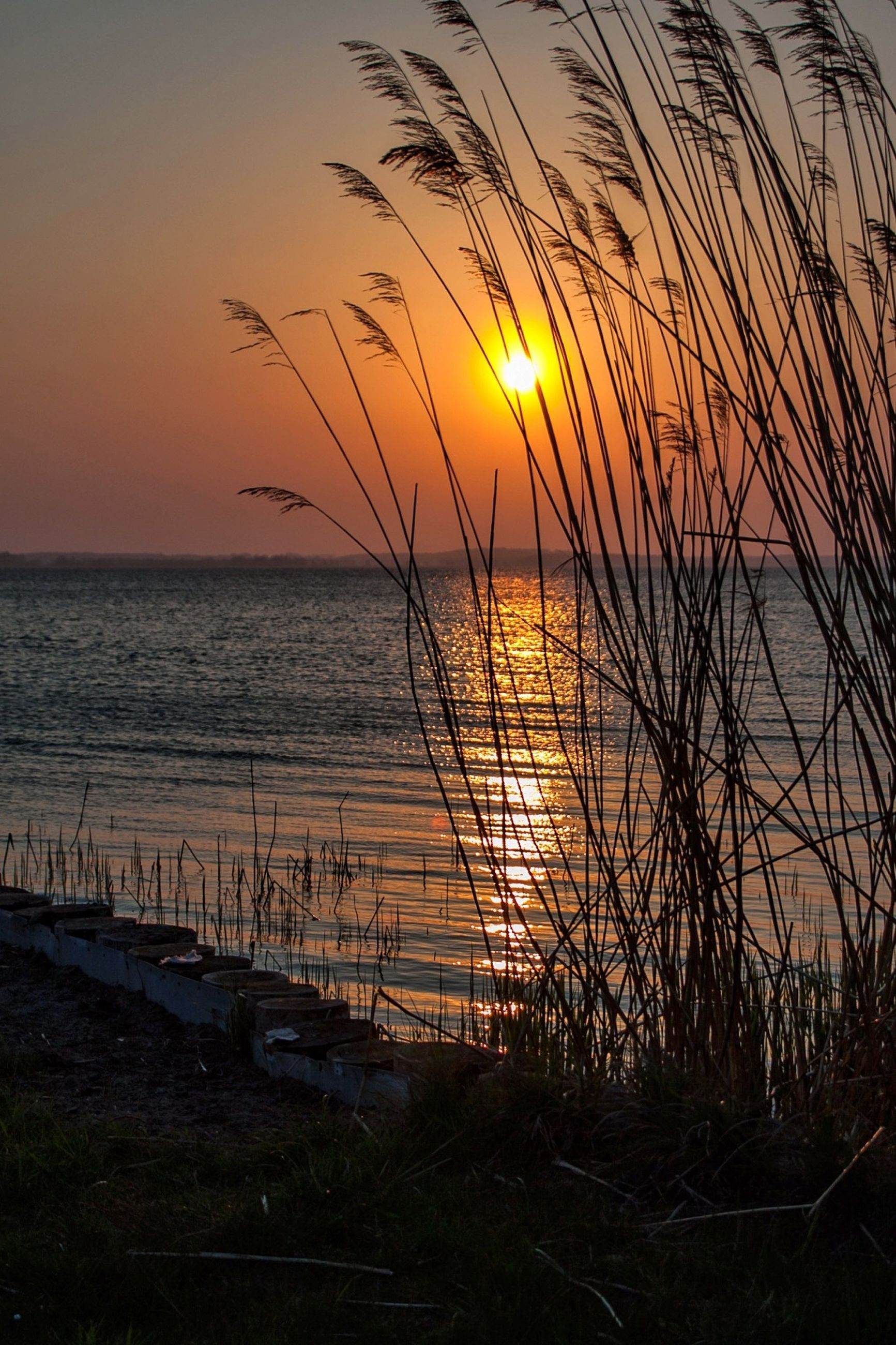 sunset, sea, water, horizon over water, beach, tranquil scene, scenics, tranquility, orange color, beauty in nature, sun, shore, silhouette, nature, idyllic, sky, reflection, plant, remote, outdoors