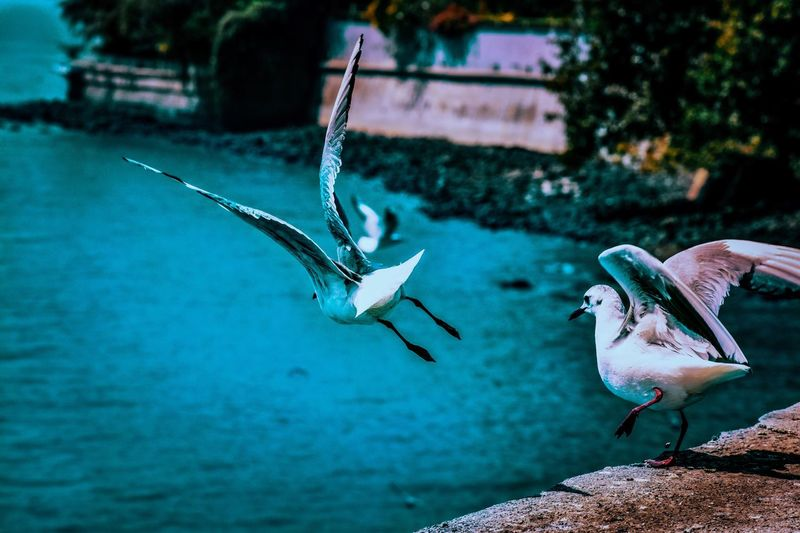 View Of Seagulls Taking Off By Sea