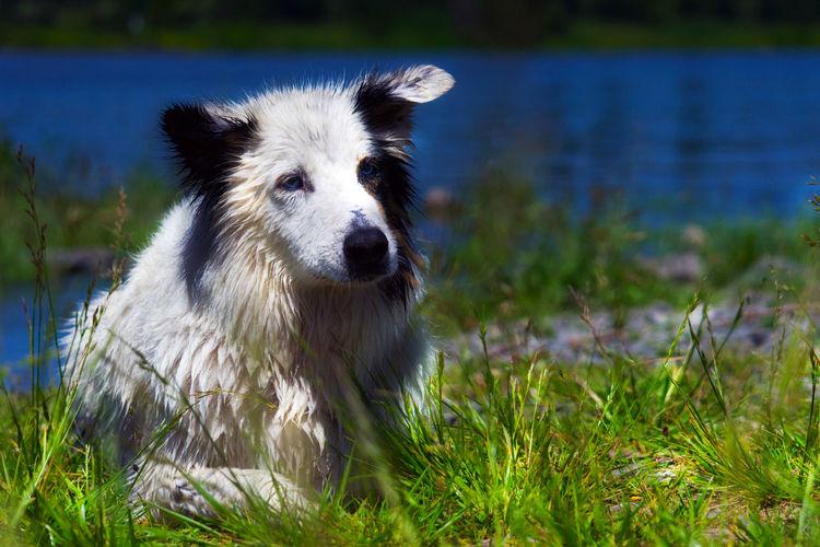 Dog looking away in lake