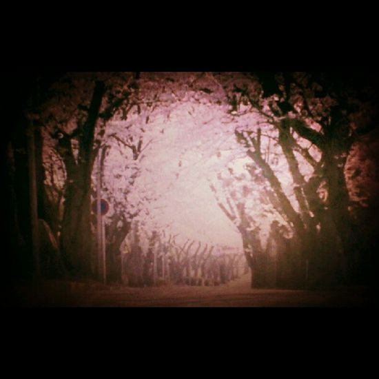 Karena suasana hati tak secerah sakura yang tengah mekar Sakura Jepang Japan Instabeauty Asia picoftheday