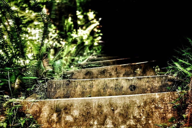 Stairway to Darkness Tree Forest Stairway Stairs Narrow Steps Woods Pathway Walkway Long Steps And Staircases Staircase