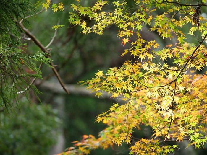 Tree Defocused Leaf Close-up Sky