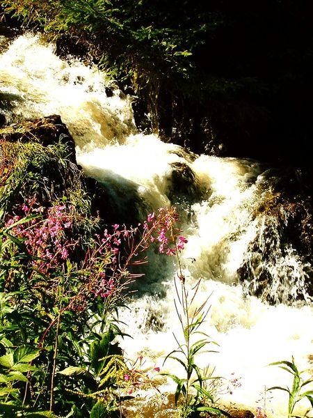 Slovakia Nature Streamlet Beauty