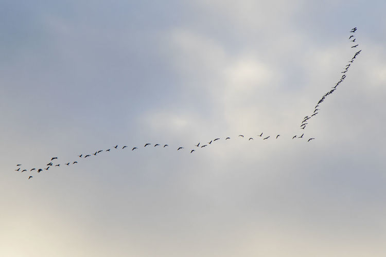Birds flight in the sky, background. clouds and blue sky.