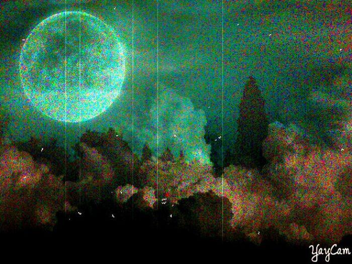 moonlit misty meadow