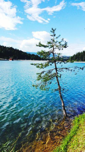 Tree_collection  Lake Lago Hello World Relaxing Alone Cielo Azzurro