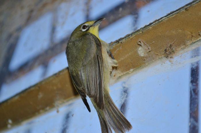 Nikon South Africa Orange River Bird Close Up