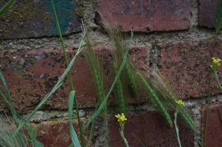 3 Brick Work Bridge Wall Close-up Day Deterioration Flowers Grass Green Color Growing Growth Nature No People Old Outdoors Plant Run-down Wall - Building Feature Yellow Yellow Flower