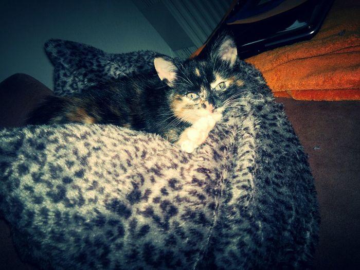 Cat Sweet Babycat