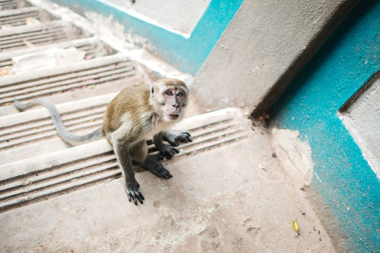 High angle view of monkey sitting on staircase