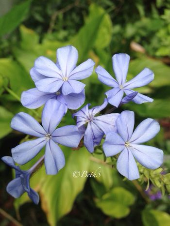 Eye Em Best Shots -Flowers EyeEm Best Shots Flower#garden#nature#ecuador#santodomingoecuador#eyeEmfollowers#iphoneonly#nofiltrer#macro_garden#pretty#beautiful#followme#sho