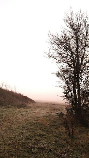Fog Tree Nature