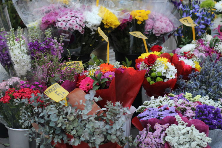 flower Moms & Dads Flower Head Flower Flower Market Multi Colored Bouquet Retail  Variation Flower Shop Petal Pink Color Peony  Blossom In Bloom Retail Display Stamen Cherry Blossom Magnolia Pollen Botany Wisteria Bunch Of Flowers Apple Blossom Zinnia  Pistil For Sale Blooming Plant Life Day Lily Hibiscus