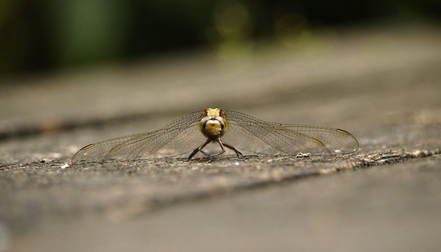 Surface level of dragonfly on wood