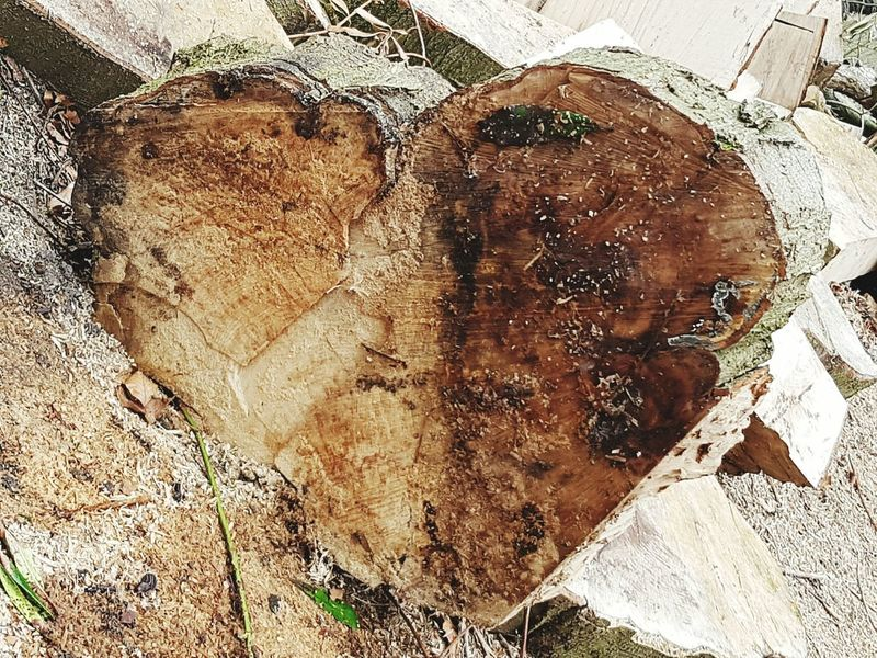 Tree Love Tree Log Tree_collection  Tree Hugger Love In Nature Heart Shape