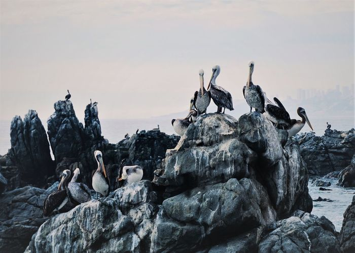 Animal Themes Animals In The Wild Astrology Sign Bird Colony Day Landscape Large Group Of Animals No People Outdoors Penguin Perching Sky Togetherness