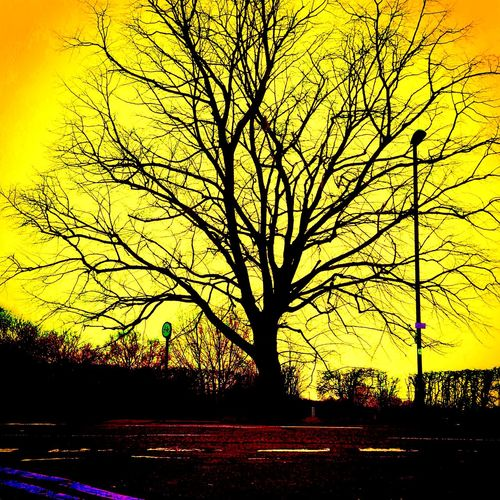 Tree in the park Tree Nature Landscape greenery Relaxing London UK Uk world Walking Around Getting In Touch salute Landscapes