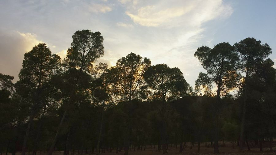 Sunset And Trees Quiet Moments Oujda City, Morocco سبحانك ربي الحمد_لله Trees Forest Sidi M3afa Oujda A Walk In The Woods it s amazing how a walk in the forest can help after a sad moment الحمد للله