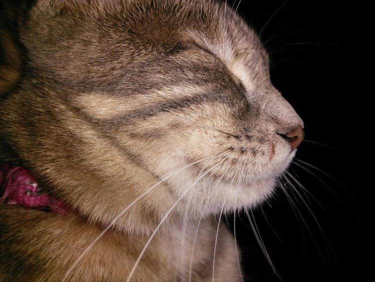First Eyeem Photo Kedi Cat Kedicik Kedi Aşkı
