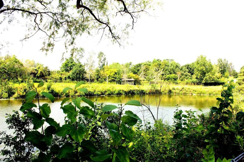Nature green leaves Tree Nature Lake Outdoors Reflection Water Day EyeEm Ready