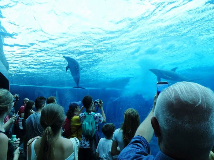 UnderSea Sea Life Scuba Diving Swimming Water Whale Shark Underwater Sea Crowd Adventure