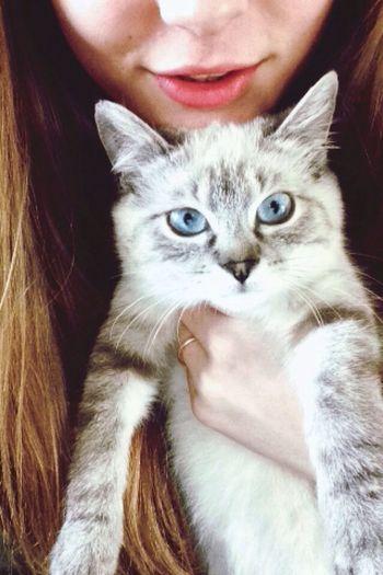 Cute Pets Blue Blue Eyes Kitty