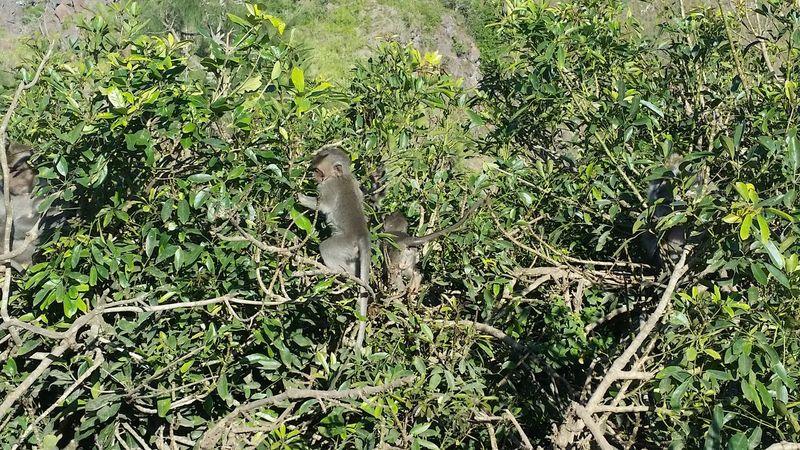 Plant Nature Freshness Scenics Non-urban Scene Travel Destinations Vacations Outdoors Leisure Activity Hikingadventures Wildlife & Nature Monkeybusiness