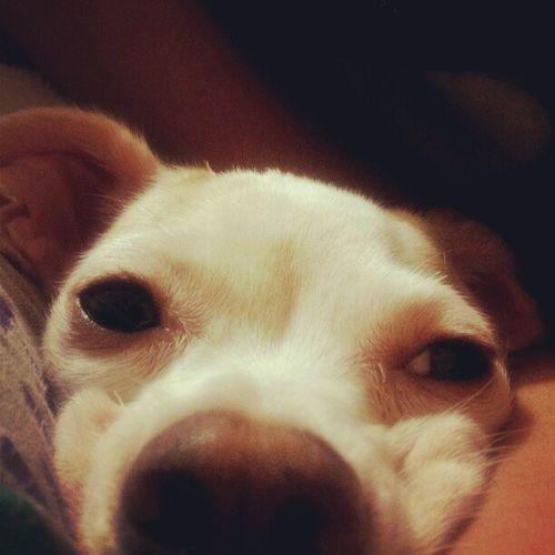 Torta Face<3 Bambi Sleepymode Doggie Fushiface thedog