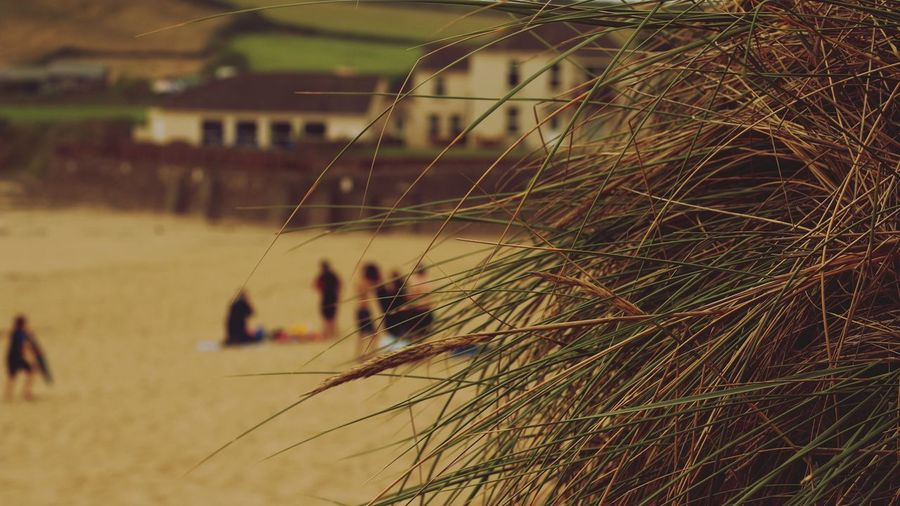 EyeEm Selects No People Focus On Foreground Outdoors Nature Grass Sea Beach Devon
