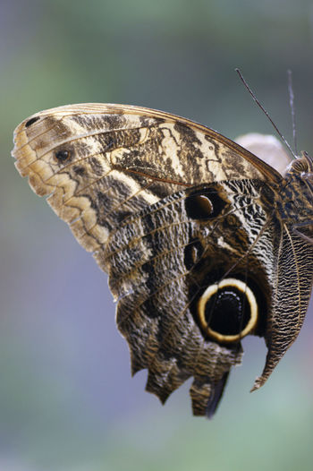 Close-up of butterfly