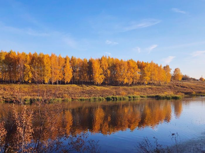 River осень Water Reflection Plant Sky Tree Beauty In Nature Tranquility Nature No People Day Lake
