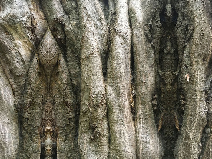 Druid Power Psy Psychedelic Spirituality Backgrounds Close-up Day Druid's Secret Place Forest Spirits Full Frame Hallucinations Nature No People Outdoors Psyart Psychedelicart Psychedelicdreams Rough Spiritual Textured  Tree Tree Spirits Tree Trunk Vision Visionary