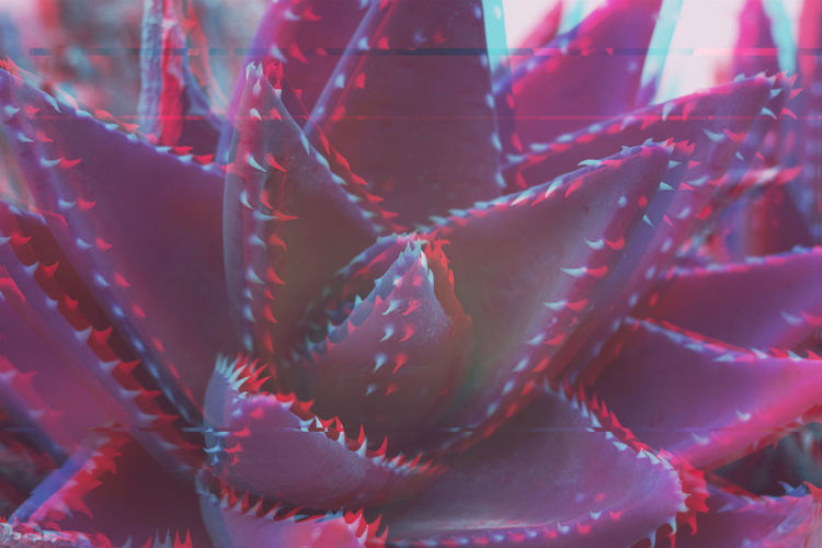 Aloe Vera Cactus Glitch Pattern Glitch Glitched Analog Signal Art Floral Aloe Vera Cactus Abstract Background Beauty In Nature Blue Close-up Day Effect Floral Flower Nature No People Pattern Purple Rosé Spike Texture Thorn Trend Ultra Violet Ultraviolet Violet