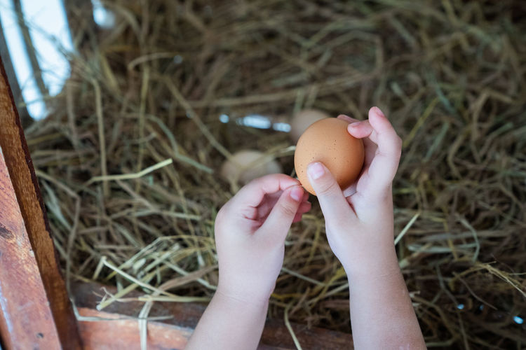 children hand hold egg from coop One Person Human Body Part Human Hand Food Real People Egg Hand Holding Food And Drink Close-up Nature Body Part Day Focus On Foreground Childhood Unrecognizable Person Healthy Eating Fragility Plant Finger Chicken