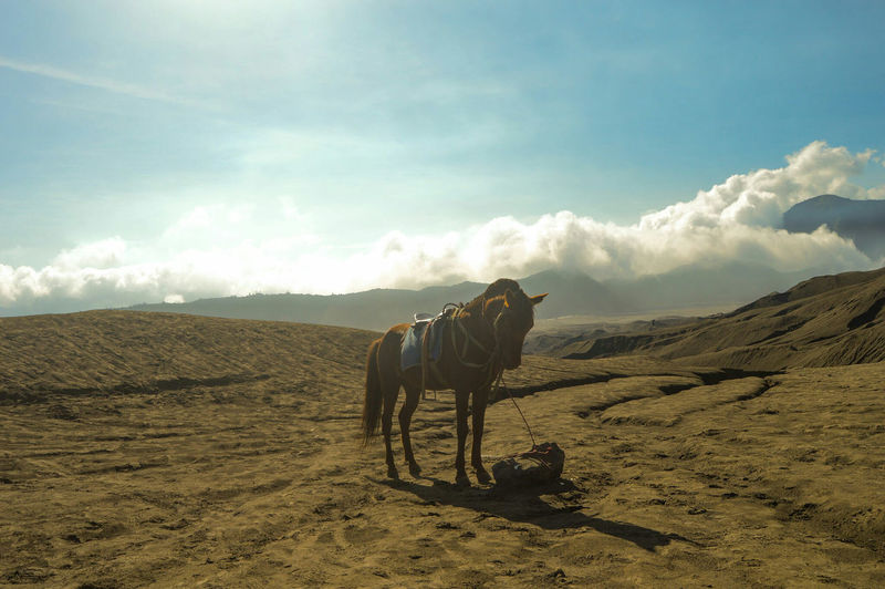 Horse Standing At Bromo-Tengger-Semeru National Park Against Sky On Sunny Day